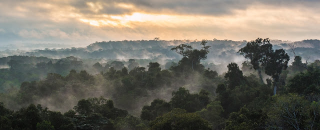 Amazon biodiversity hotspot to suffer even more losses after contentious law passed