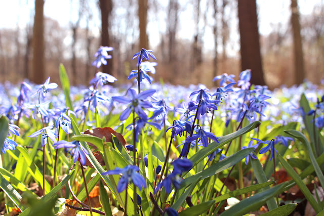 Tiergarten park in spring, Berlin - travel & lifestyle blog