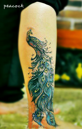 Free Tattoo Designs : Peacock feather tattoo designs