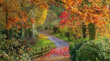 Qué es un arboreto (Arboretum)