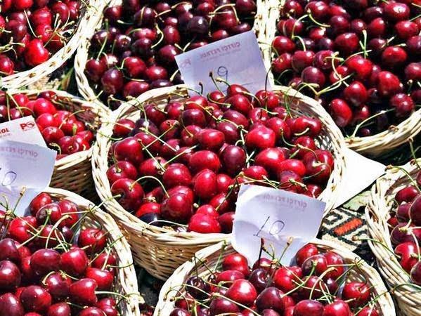 Recolección de la cereza en Sefrou (Marruecos)