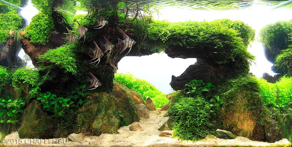 Bể thủy sinh cầu vòng có kích thước 60 x 30 x 36 cm