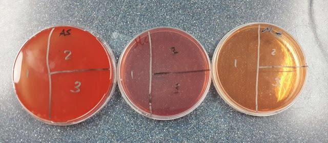 Taxonomia bacteriana y biologia