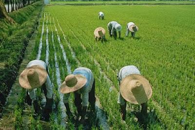 Progresos agricolas
