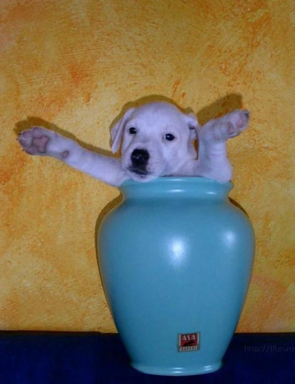 dogs is a liquid