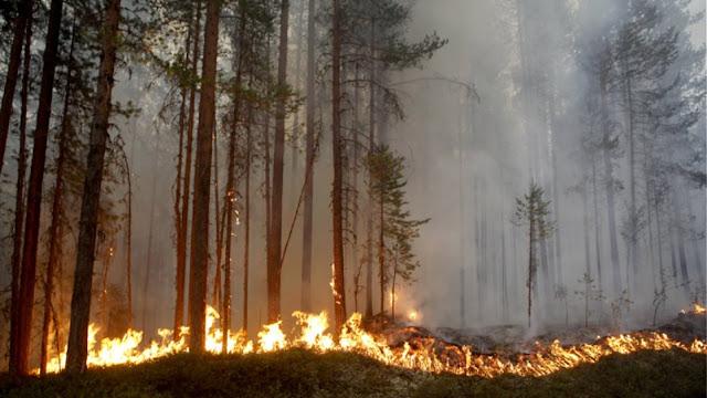 Καύσωνας στην Φινλανδία - Μεγάλες πυρκαγιές στη Σουηδία