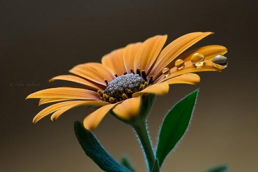 Bunga Matahari Cantik Fotografi 500px