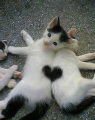 coeur sur deux chats