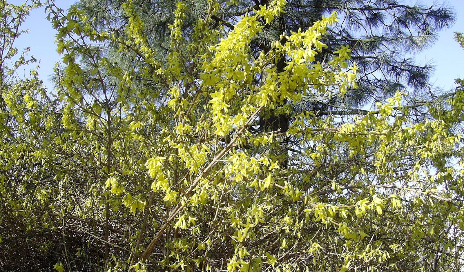 vintergronne busker med blomster