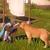 'Can You Pet the Dog?': Perfil no Twitter cataloga quais Games você pode fazer carinho no cachorro