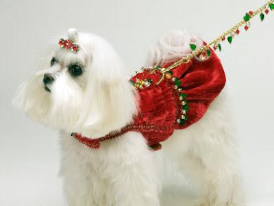 chien blanc original
