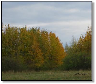 bunter Herbstwald am Abend