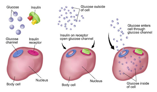 Insulin Signaling Defects Tied to Conditions Beyond Diabetes