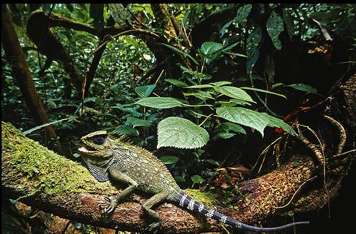 wisata Taman Nasiona Lorentz