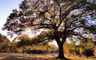 9. Piedmont Park