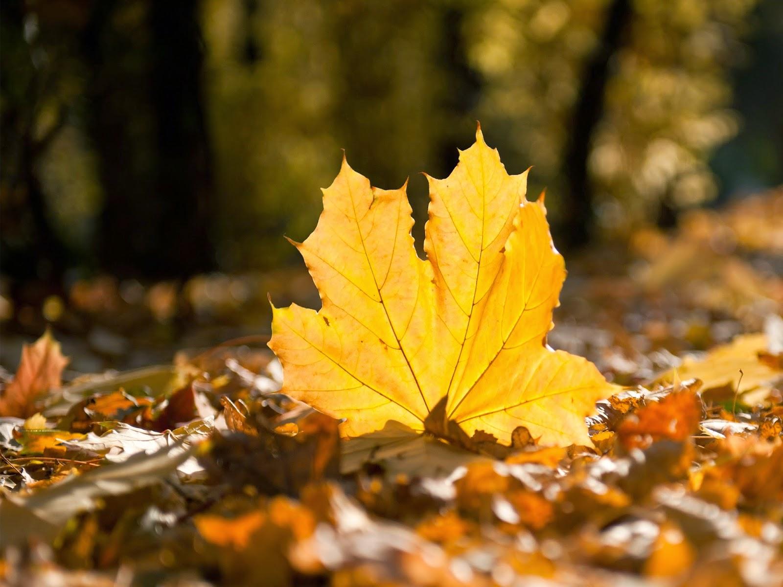 Hasil gambar untuk belajar dari daun gugur