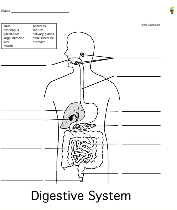 Mr.Slavich's Science Class: Life Science Digestive System