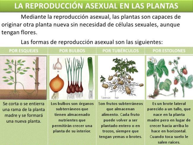 Sexual y asexual en las plantas