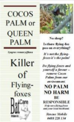 cocos palms.pdf