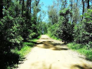 Estrada de Terra no Retorno da Barragem - Parque Saint Hilaire, Viamão