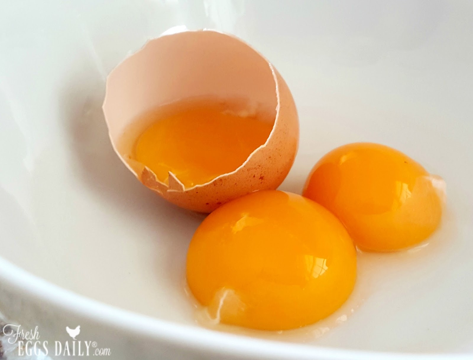 how to see whats in a chicken egg