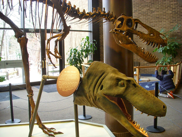 Raptormaniacs Cleveland Museum Of Natural History