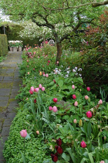 appelbloesem met tulpen