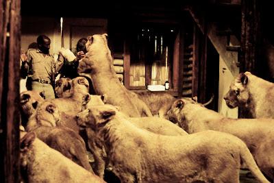 http://3.bp.blogspot.com/-gIKo7Me2lrA/ULoc9WJ6jkI/AAAAAAAAMes/tgFzqT079JE/s400/roar+crowd.jpg