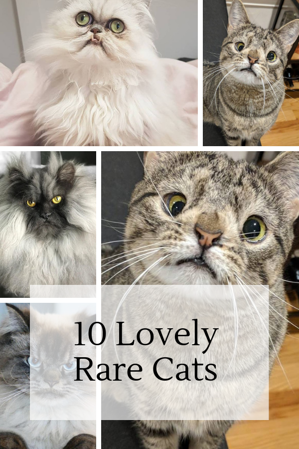 10 Rare Lovely Cats