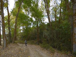 Bosque de ribera del río Tormes