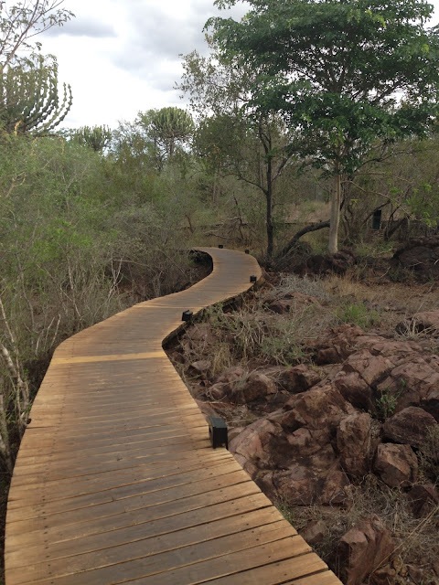 stairways to our suite, way to our suite, in the middle of the bush, wildlife, sinigita, lebombo lodge