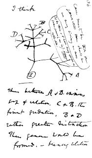 生命の樹 ダーウィン