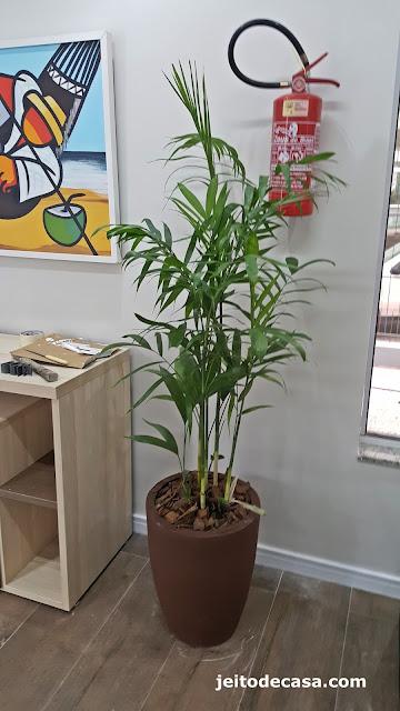 palmeira-chamedorea