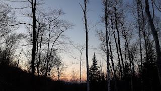 Forêt, coucher de soleil