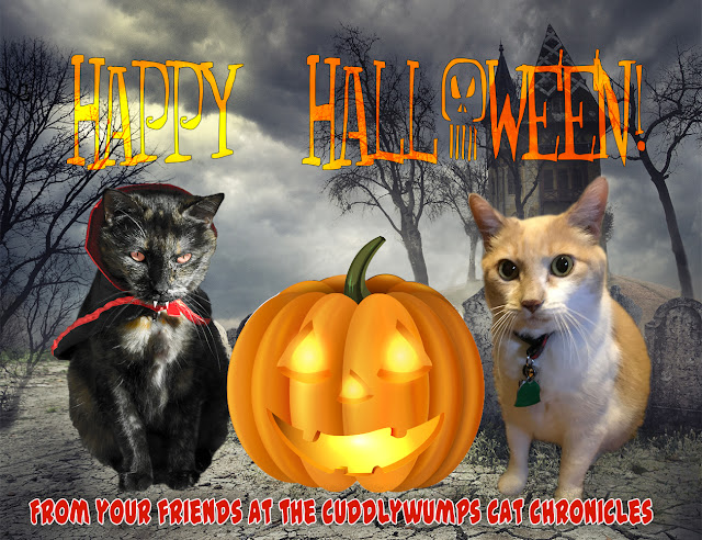 Happy Halloween from your friends at The Cuddlywumps Cat Chronicles