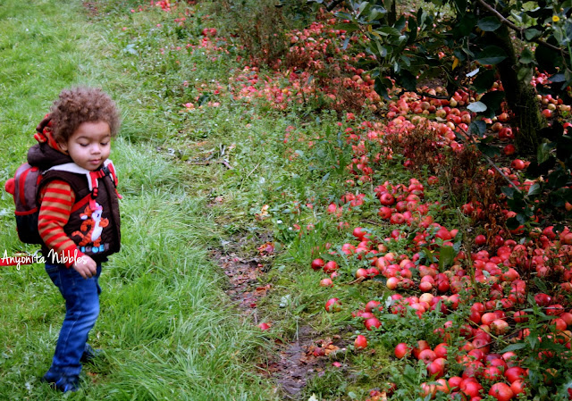 Apple picking in Cheshire with a toddler from www.anyonita-nibbles.com