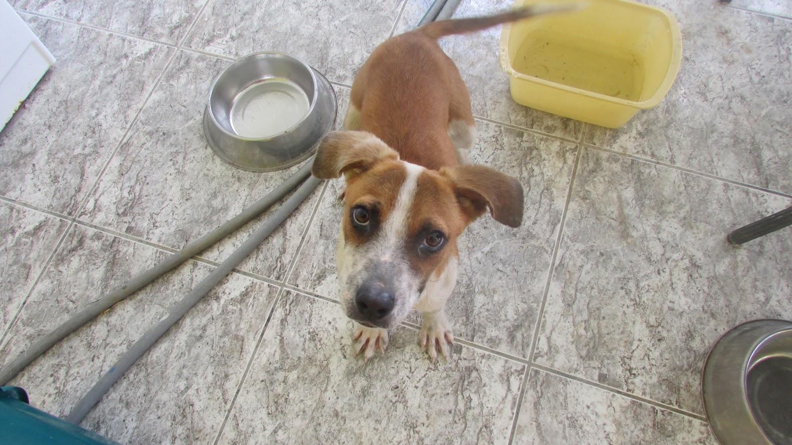 Carr House Lane Dog Rescue