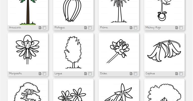 Dibujos Para Colorear De Flora: Dibujos De La Flora Chilena, Color Y Para Colorear