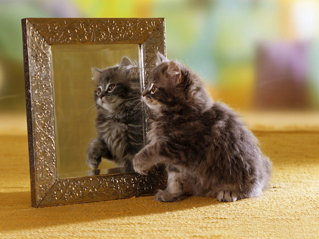Cat Lookin In Mirror