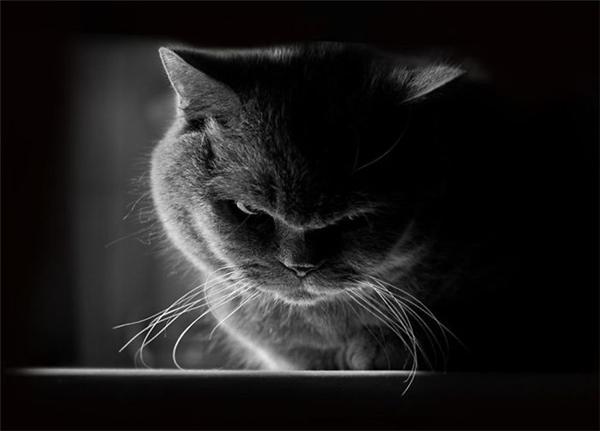 """Đừng dại dột làm phiền khi các """"boss"""" đang """"khó ở"""""""