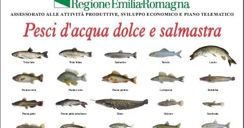 Il bilancionato pesci d 39 acqua dolce e salmastra for Pesci acqua dolce fredda laghetto