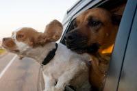 Antes de qualquer coisa, tenha sempre em mente o seguinte: cachorros são praticamente narizes ambulantes
