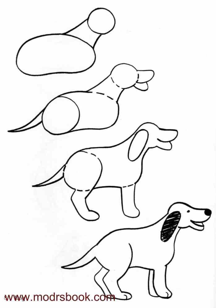 Contour Line Drawing Of A Dog : كيفية رسم الحيوانات خطوة بخطوة