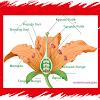 Apa Saja Fungsi dan Bagian Yang Terdapat Dalam Bunga ?