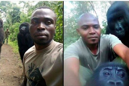 Anti-Poaching Ranger's Extraordinary Selfies with Two Gorillas