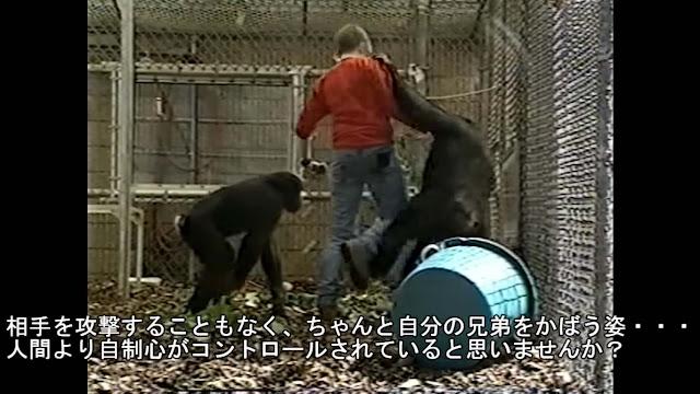 人間より知的?暴力を知らない、平和な生き物ボノボ