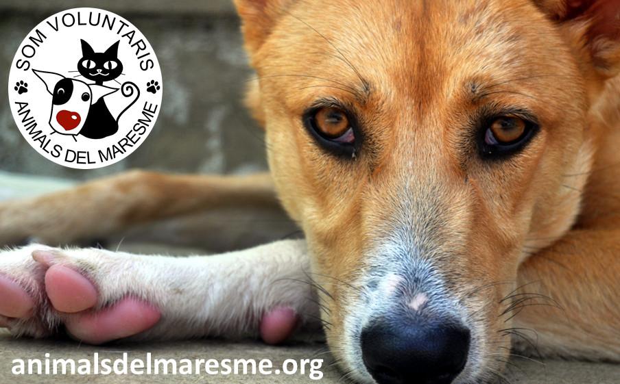 Blog animals del maresme