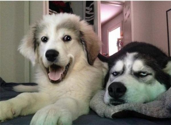 """""""Cười văng hàm"""" với những biểu cảm của """"khuyển nhi"""""""