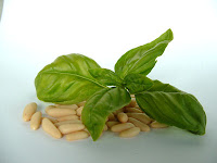 How to Harvest Basil