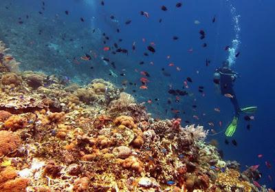 foto diving di pulau alor ntt